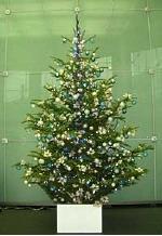 tree02